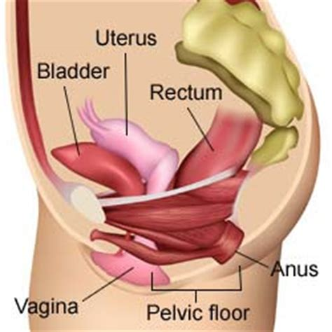 Spasms or contractions in vagina vaginal and uterus jpg 250x250